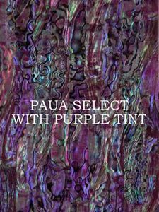 ALVS Paua with Purple