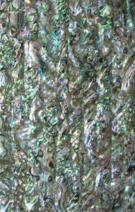 LVS Green Abalone Select 5 1/2 x 9 1/2